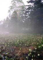 Ozemizubasyo1